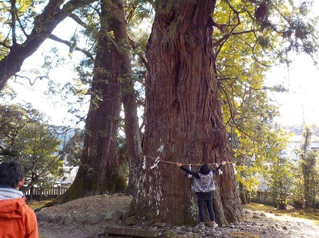 那賀町視察ツアー途中立ち寄った神社御神木は奈良時代から…。ということは樹齢1,000年?!はいっとる(諸説有リ)皆さんびっくり何から何までポテンシャルが高い町だ〜けど、あまり知られてない場所。きっとこうやって大事に守って来たんやな。#wood#woodsurfboard #ウッドボードKUKU #木頭杉#御神木#エネルギー#パワー#神秘的#癒やし#リラックス#のんびり#里山#木工職人 #取材#移住#定住#見学ツアー