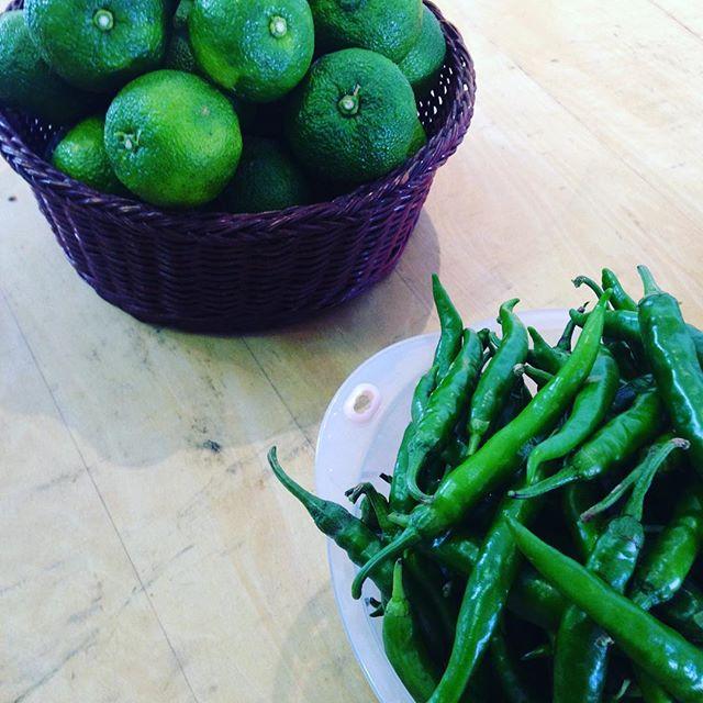 柚子こしょう作りワークショップ!ミキさん、カズくんはりきってやってます!KUKUカッティングボードも使って頂いてます(^^) #ワークショップ#柚子こしょう#那賀町#とれたて#無農薬#オーガニック#野菜#青柚子#唐辛子@mebina @nakawood