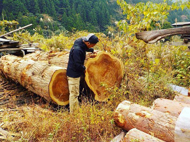 木頭杉原木出たー!二本とも落札。ウッドボード用の板にして、天然乾燥。2年はかかるけどね〜。 #ウッドボードkuku #木頭杉#樹齢 #100年#原木#天然乾燥@nakawood