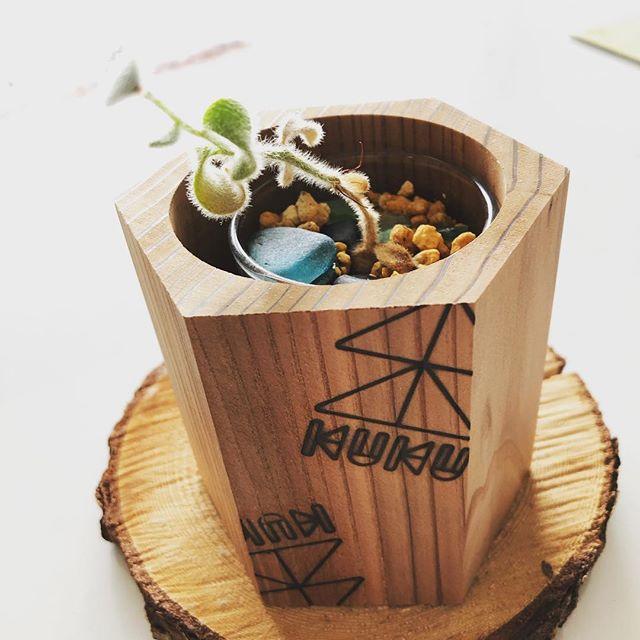BEAK TIMEに癒されるアイテム(^^) #ウッドボードkuku #woodworking #木頭杉 #woodboardkuku #観葉植物 #coffeetime @nakawood