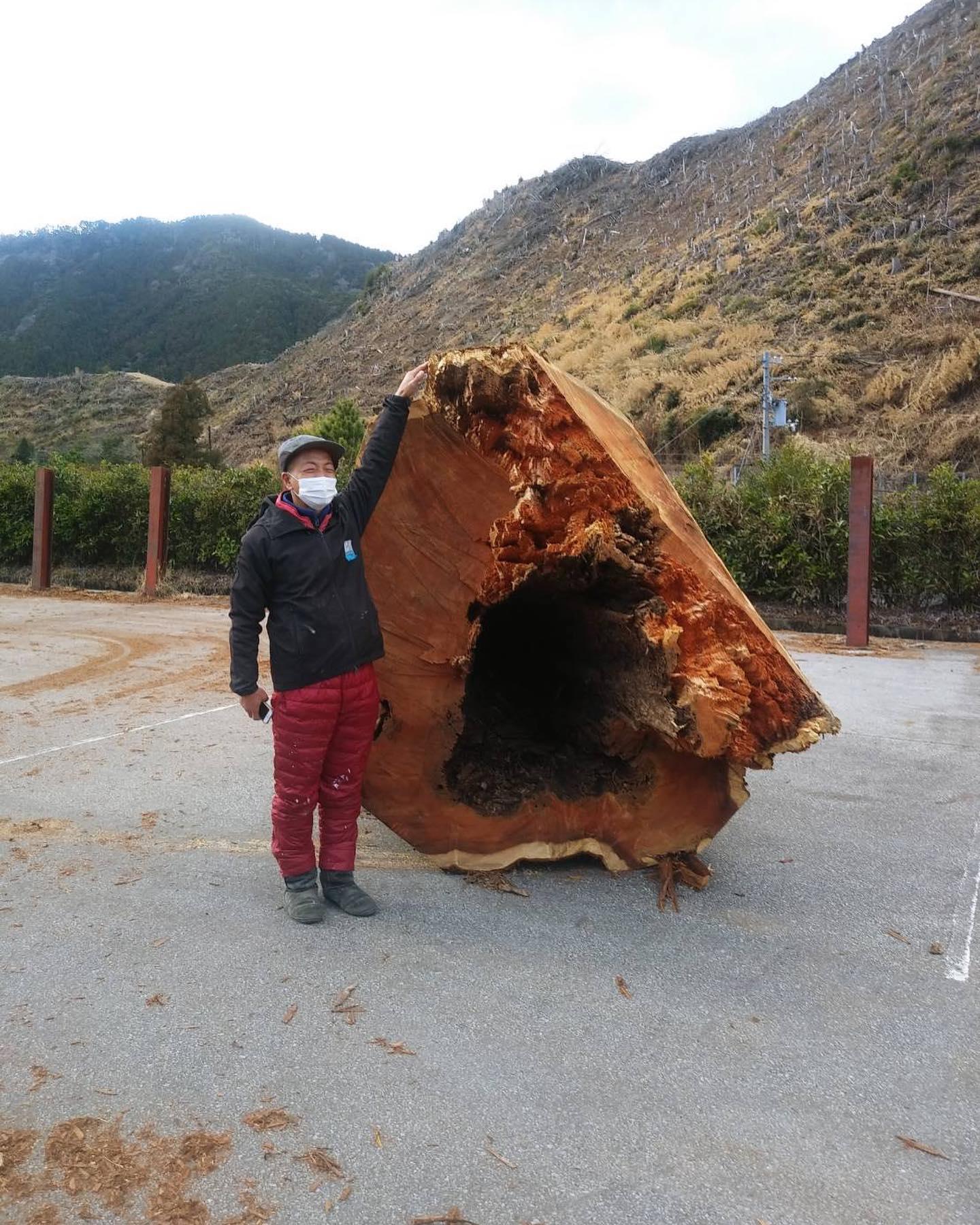 木頭杉の巨木
